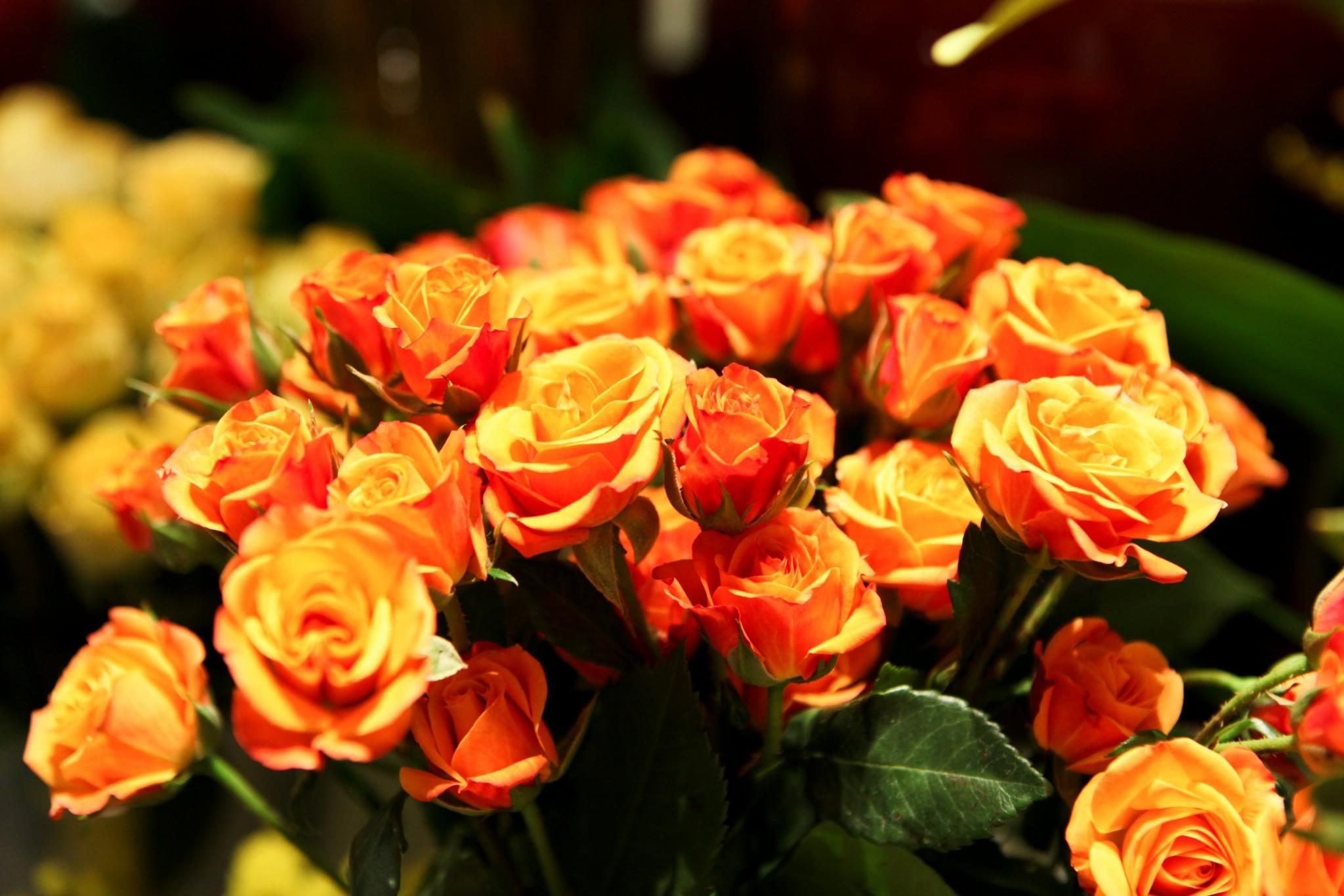 montreal florist flore l 39 atelier