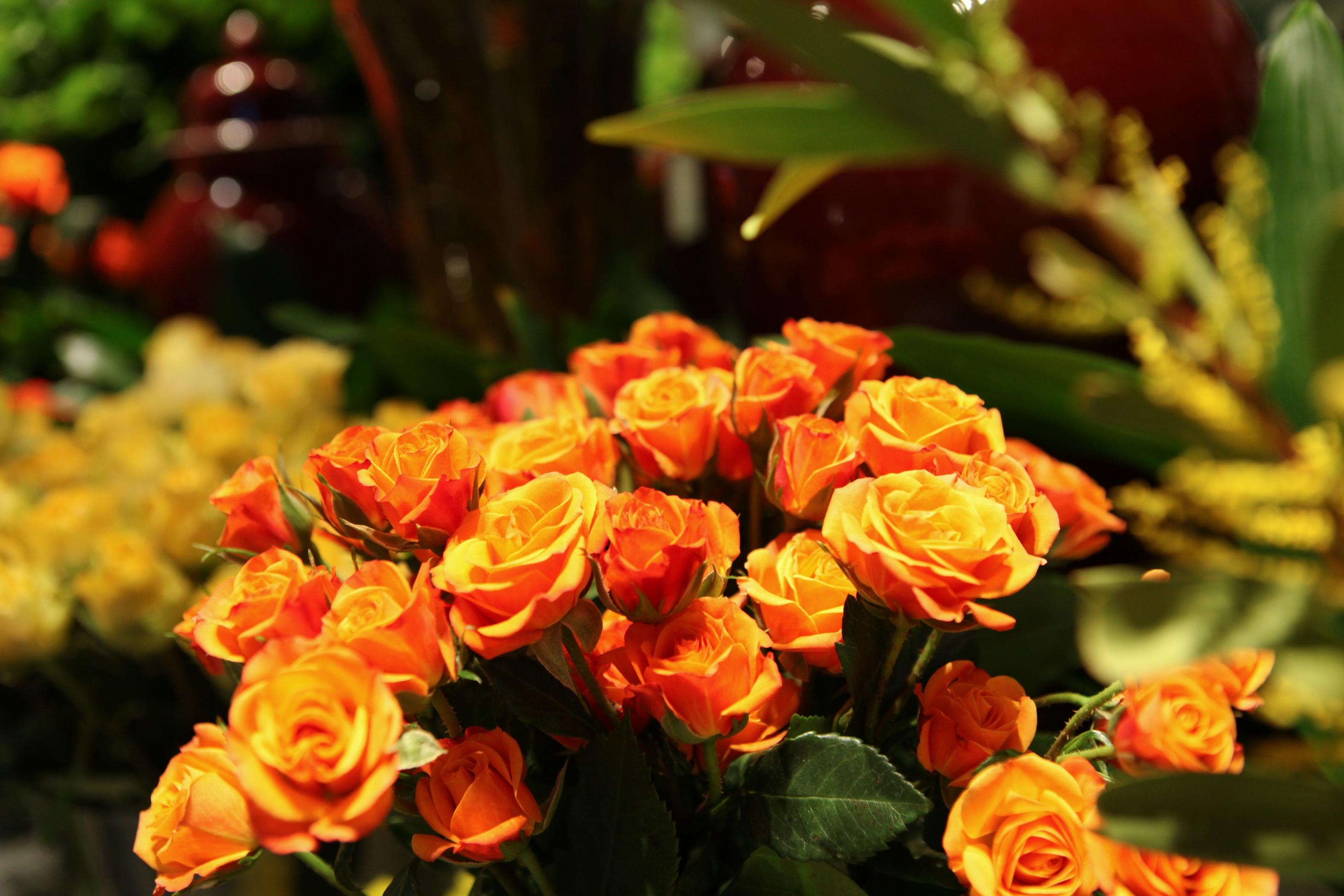 Flowers Flore L Atelier